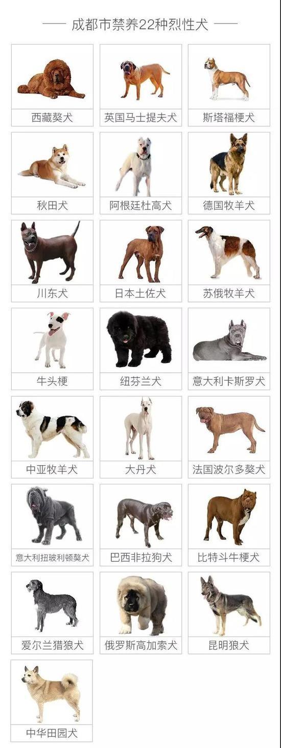 种母雪纳瑞犬价格_天一犬舍种犬展示_大型犬种