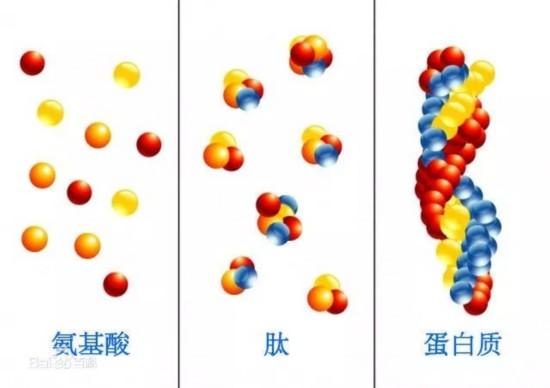 但实际上,我们一直强调的是口服胶原蛋白之所以不能美容的原因是很难保证吸收的肽刚好作用于皮肤上,或者说比例微乎其微。大人之前也具体讲过,指路胶原蛋白,张雨绮说长瘤,张韶涵说冻龄,到底听谁的?   总之!改变吃进去的分子大小,依然没有改变口服胶原蛋白的这一BUG!也就是说这款胶原低聚肽口服产品跟其他胶原蛋白口服产品比,没有本质区别。