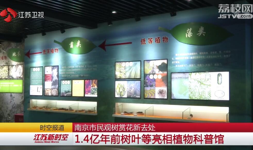 南京市民观树赏花新去处 1.4亿年前树叶等亮相植物科普馆
