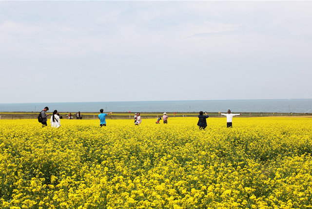 大美青海湖游人如织 迎来最美观赏时节