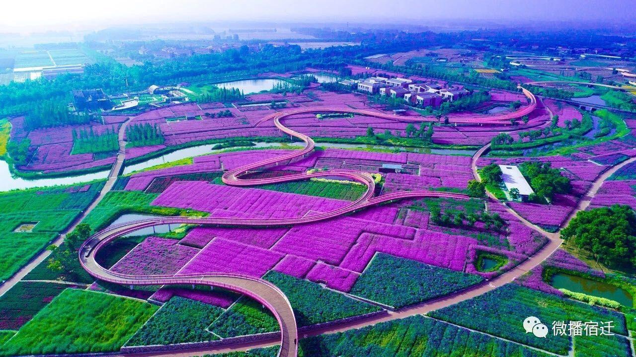 宿迁三台山已经被一大片紫色承包了!美翻的节奏!