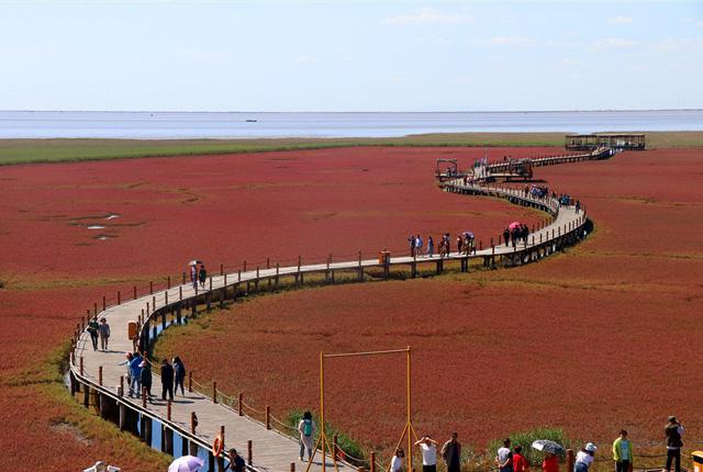辽宁盘锦:秋日红海滩美色依旧