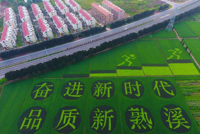 盘点各地巨幅稻田画 献礼新中国70周年
