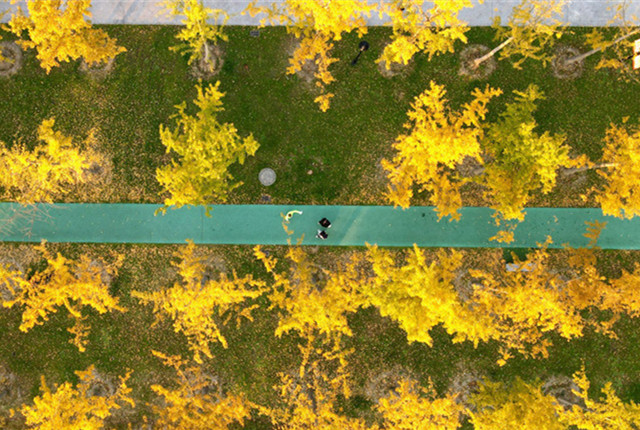 江苏扬州:初冬层林尽染美景醉游人 俯瞰下呈一幅幅美丽画卷