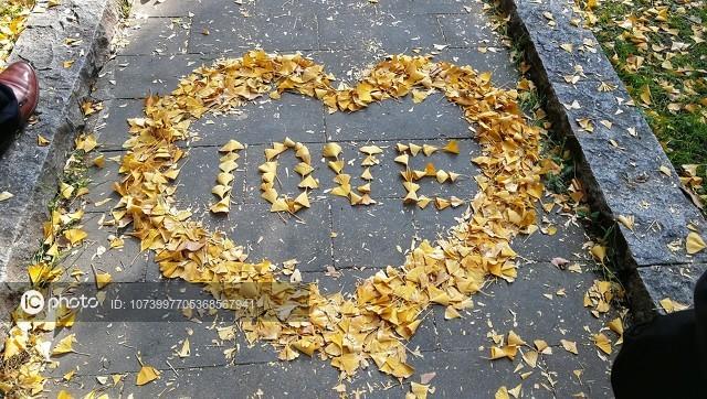 全国多地落叶缓扫 看深秋落叶大赏