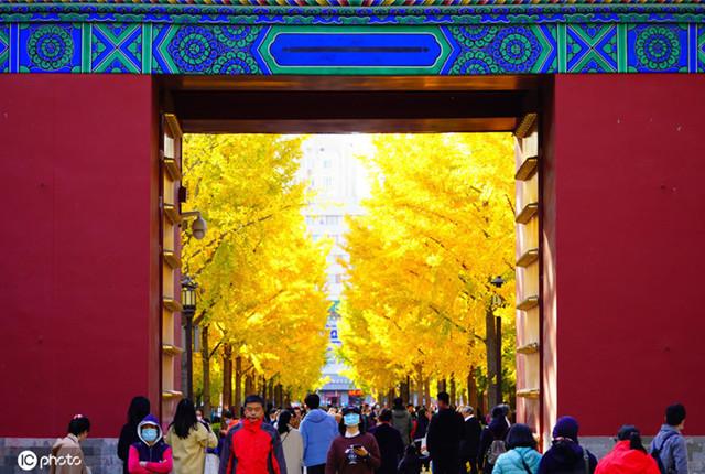 北京:地坛公园银杏大道进入最佳观赏期 吸引众多游客拍照打卡