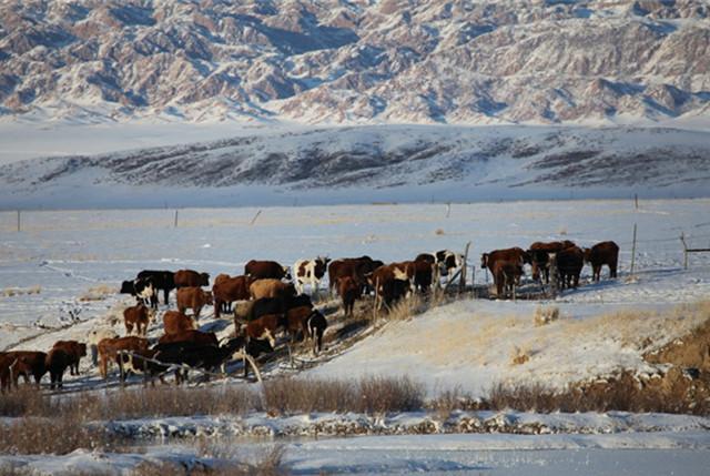 航拍新疆巴里坤雪后草原壮美如画