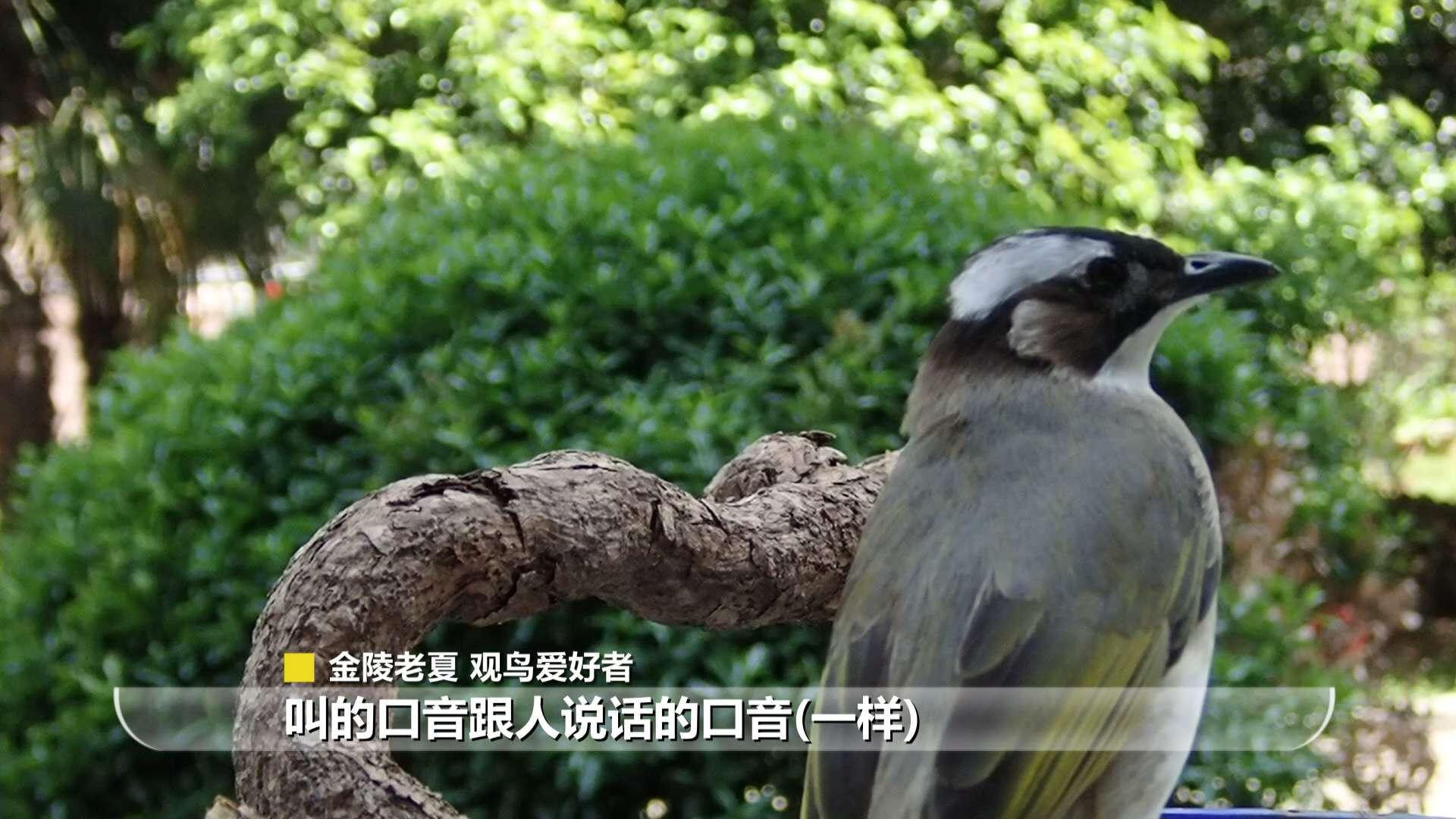 看,南京这座城市有多野 | 我苏特稿