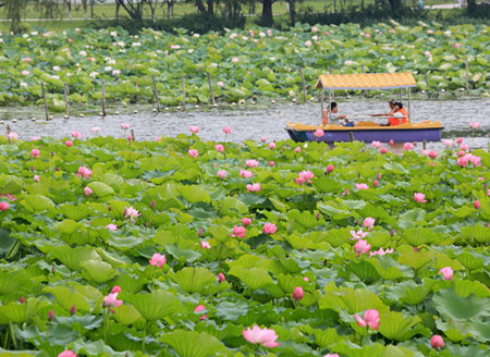 A glimpse of summer vitality through lotus in Suzhou