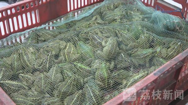 有人贩卖青蛙!即日起南通通州暂时禁售养殖蛙类