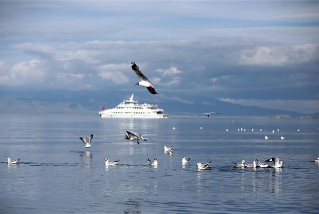 青海湖水天一色,鱼欧成群结伴别样美