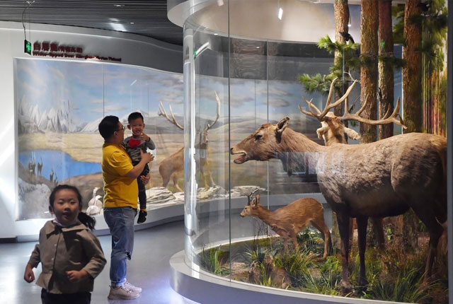 麋鹿回归中国35周年 百项研究成果都在这个展览里