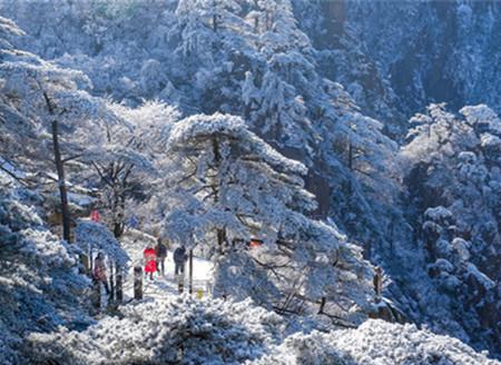 一夜寒风起万树银花开 雪后黄山美成诗画仙境