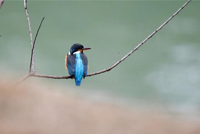 贵州仁怀:寒冬拍翠鸟 栖息湖边成风景