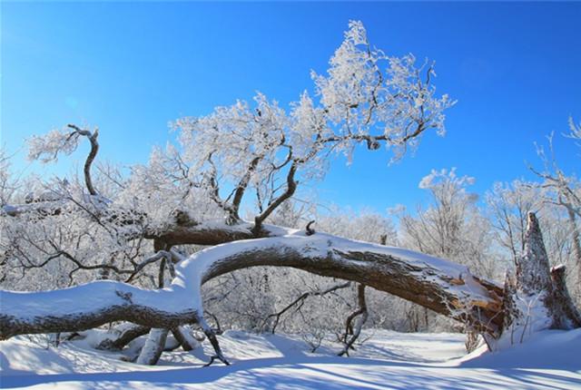 吉林敦化新开岭原生态的冰雪世界 如置身童话王国