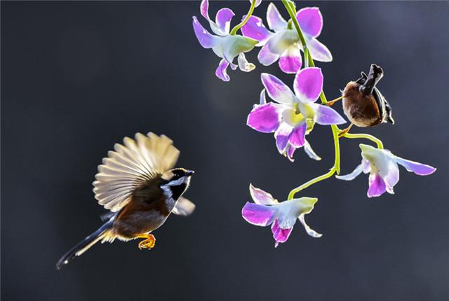 立春至 万物苏醒,鸟语花香!