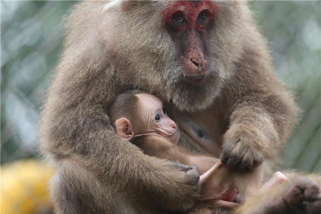 动物世界的温情母爱