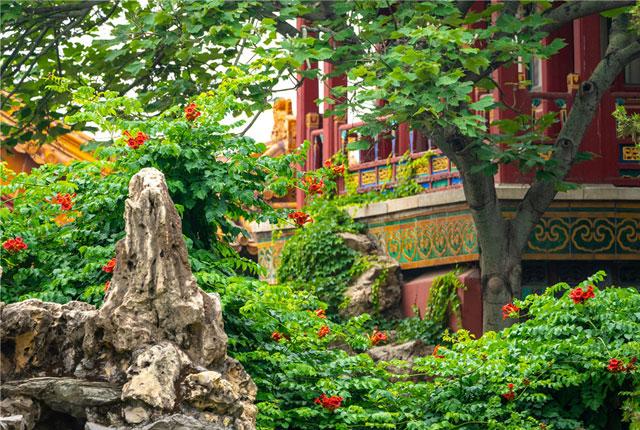 北京:初夏时节 故宫御花园美景如画